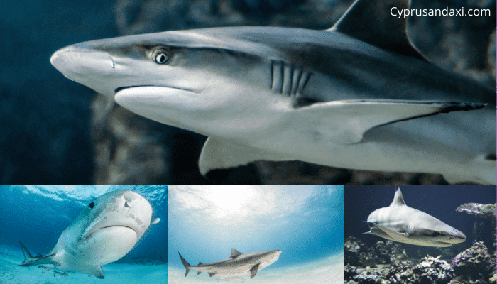 Types of sharks found in Cyprus waters