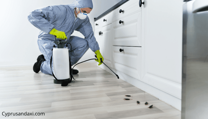Hire a professional to spray insecticides in your house