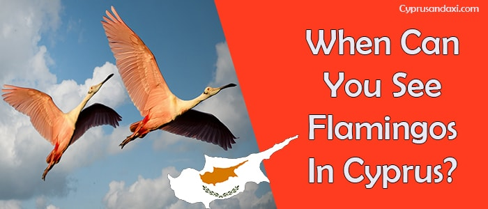 When Can You See Flamingos In Cyprus