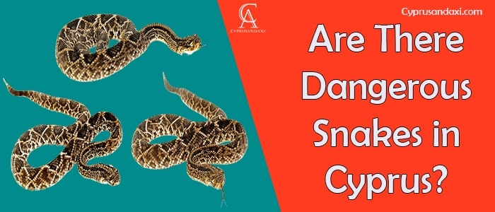 Are There Dangerous Snakes in Cyprus